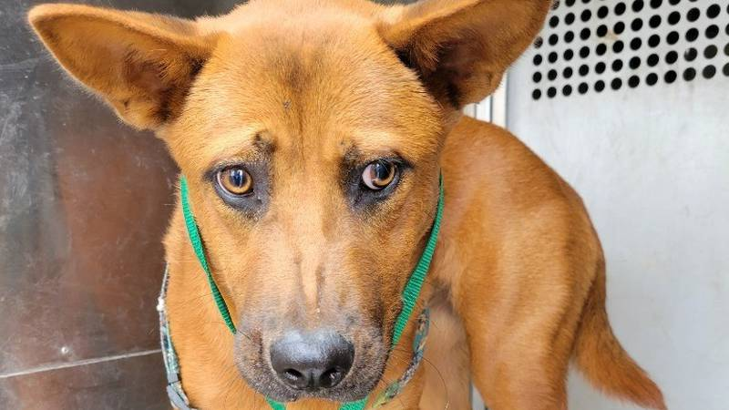 Triss, KCBD's Pet of the Day for Aug. 4.