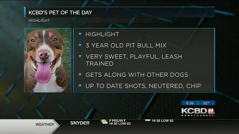 Pet of the Day: Highlight
