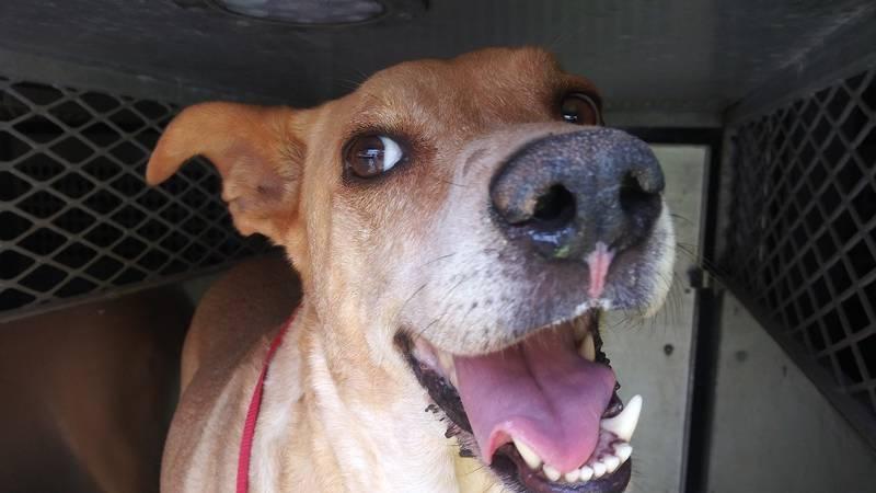 KCBD's Pet of the Day: Meet Sonni