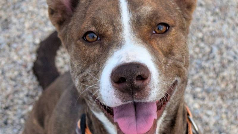 KCBD's Pet of the Day: Meet Missy