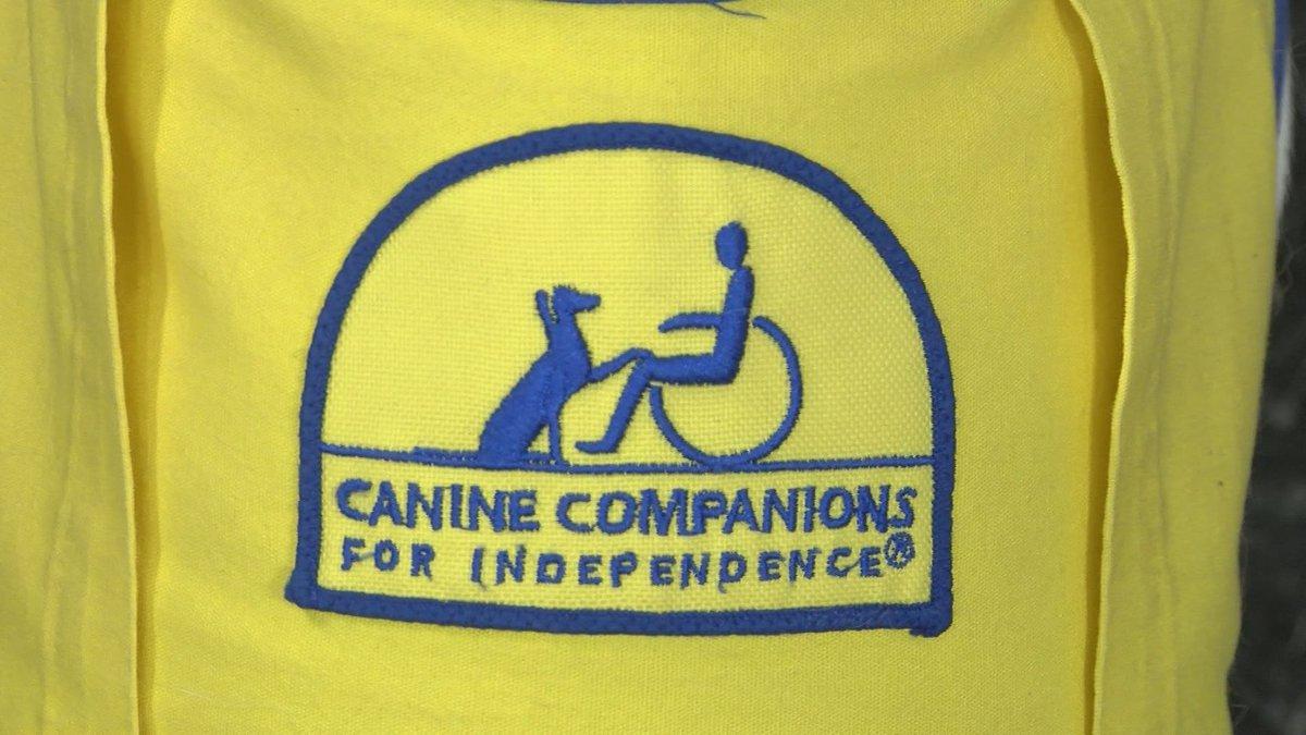 (KCBD) CCI yellow logo indicates a service dog in training