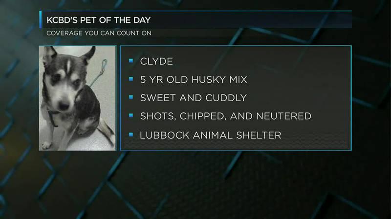 KCBD's Pet of the Day: Meet Clyde