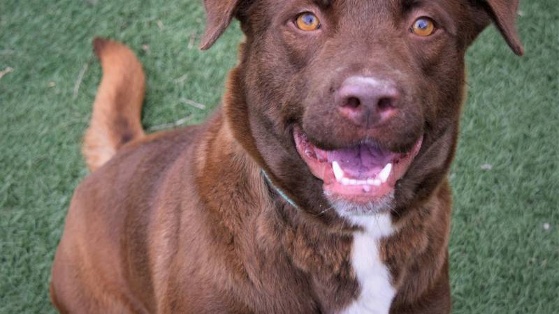 Jefa, KCBD's Pet of the Day for June 9.