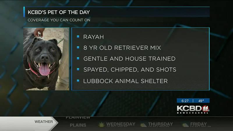 KCBD's Pet of the Day: Meet Rayah
