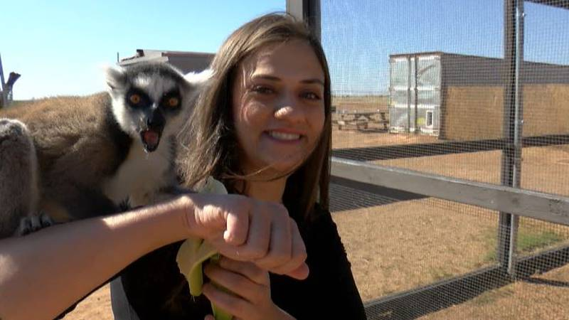Melanie Camacho hangs out with her new lemur friends at Ringtail Ranch Lemur Rescue in Lubbock.