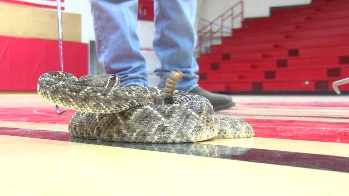 I Beat Pete: Rattlesnake Roundball in Sweetwater