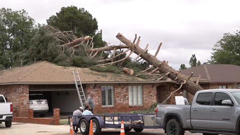 A large tree fell onto Sam Adams' home Saturday night, during a tornadic storm in Dawson County.