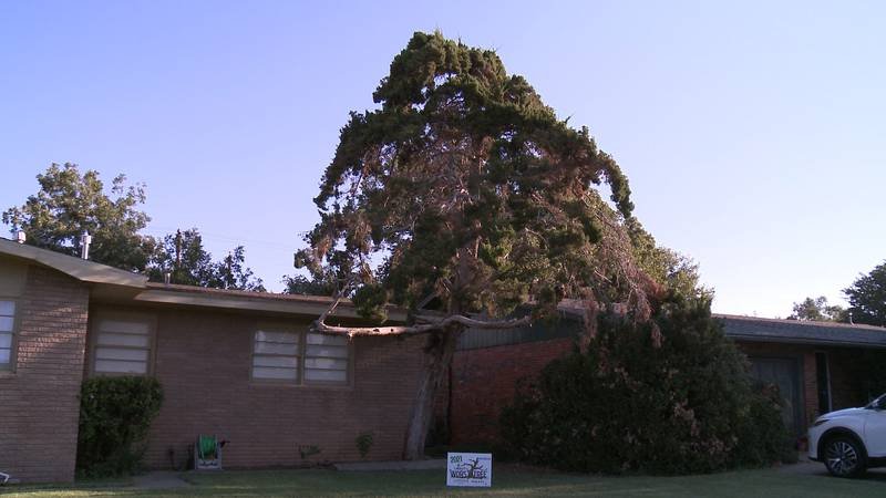 After hundreds of photos we finally found it, the winner of our Lubbock's Worst Tree contest....