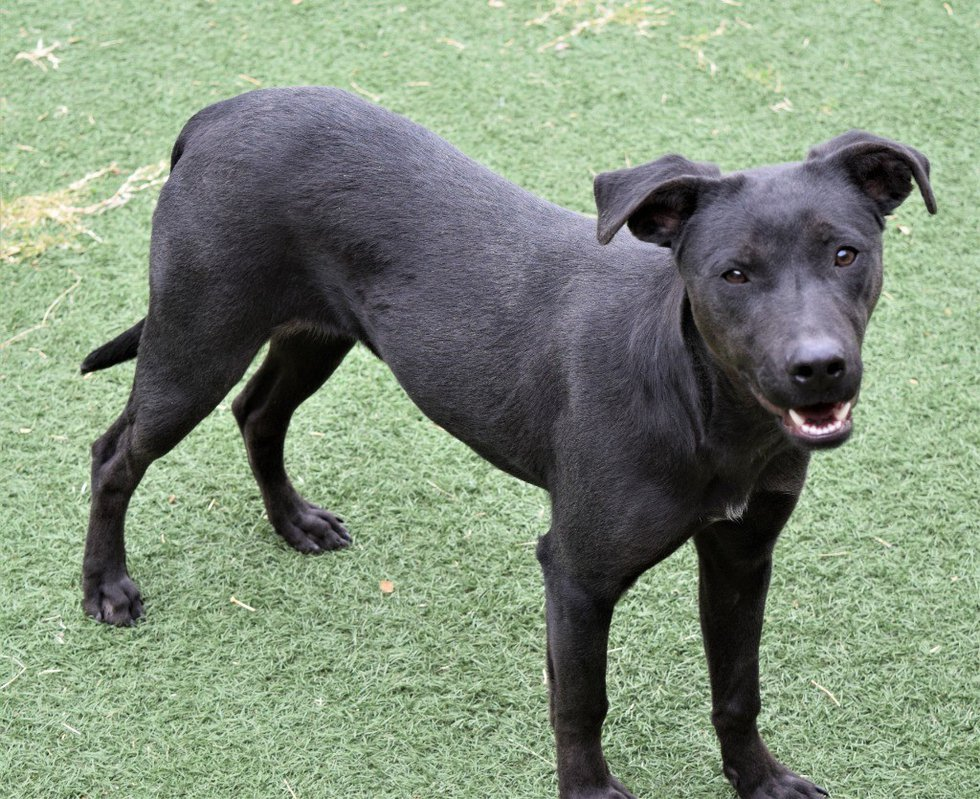 Ollie, KCBD's Pet of the Day for Nov. 19.