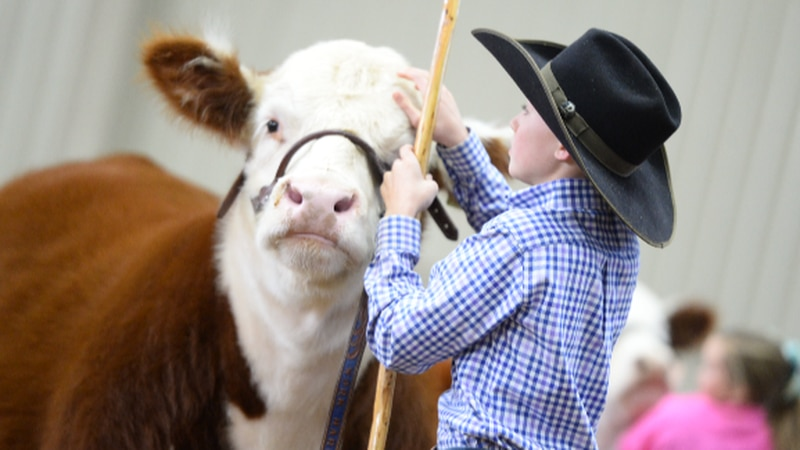 A Meadow middle schooler in $300,000 richer after he showed a grand champion steer at the Fort...