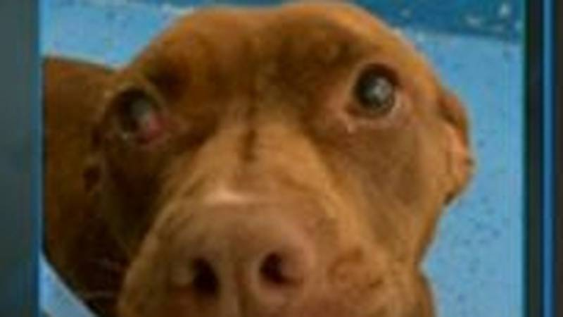 KCBD's Pet of the Day Tuesday, June 1
