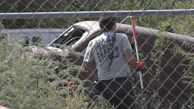 LAS seized more than 20 dogs Wednesday near 34th St. and Elm Ave.