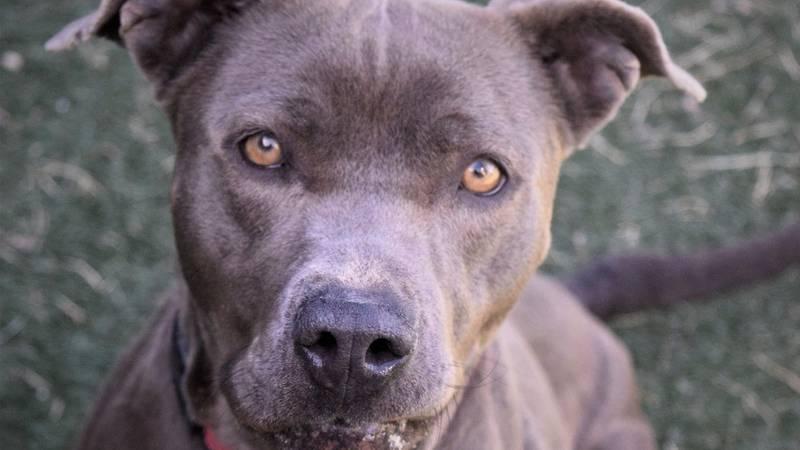 KCBD's Pet of the Day: Meet Jennifer