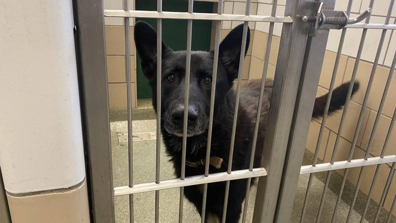 An influx of intakes at Lubbock Animal Shelter is now approaching the busiest time of the year...