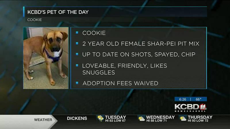 KCBD's Pet of the Day: Meet Cookie