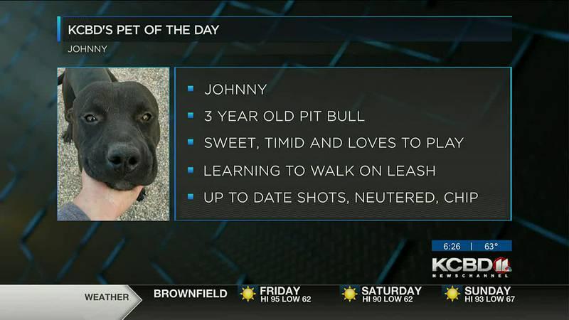 KCBD's Pet of the Day: Meet Johnny