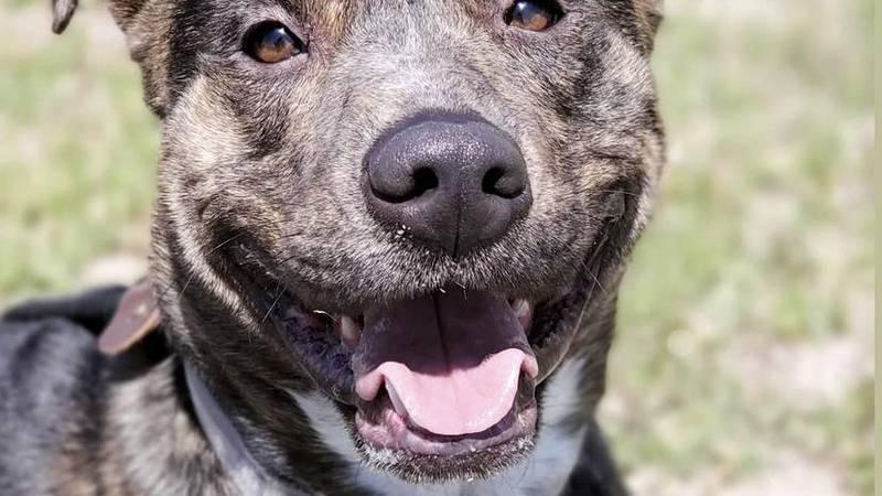 KCBD's Pet of the Day: Meet Raider