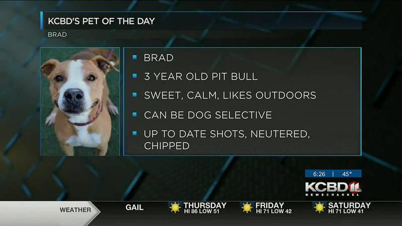 KCBD's Pet of the Day: Meet Brad
