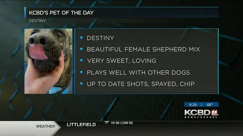KCBD's Pet of the Day: Meet Destiny