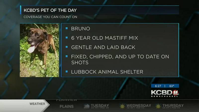 KCBD's Pet of the Day: Meet Bruno