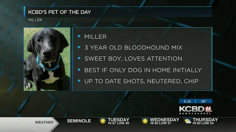 KCBD's Pet of the Day: Meet Miller