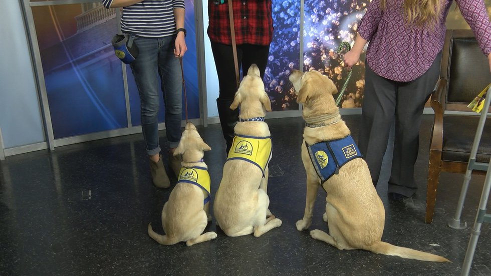 Bleu & Leianne (yellow vests) are still in training Pablo (blue vest) is a service dog