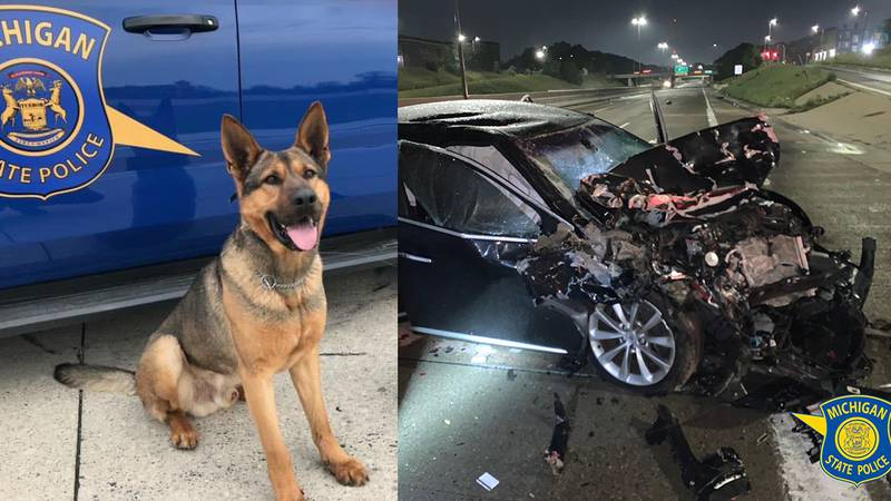 K9 Rex died from severe spine and leg injuries.